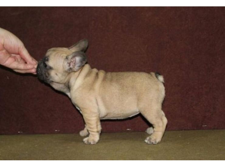 Kupujem Prodajem Psa Najveća Ponuda Pasa Svih Rasa